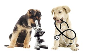 veterinarian Cave Creek